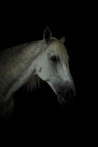 Dark Horse by Daivd Holloway