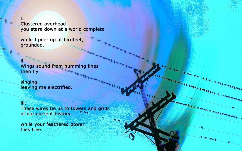 pole & birds 1 copy