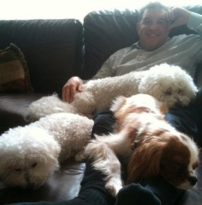 Covered in dogs.