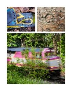 Arnold Arboretum photos.