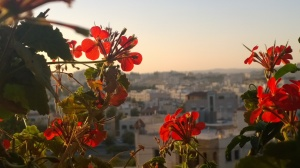 View of Amman skyline with red geraniums at sunset.