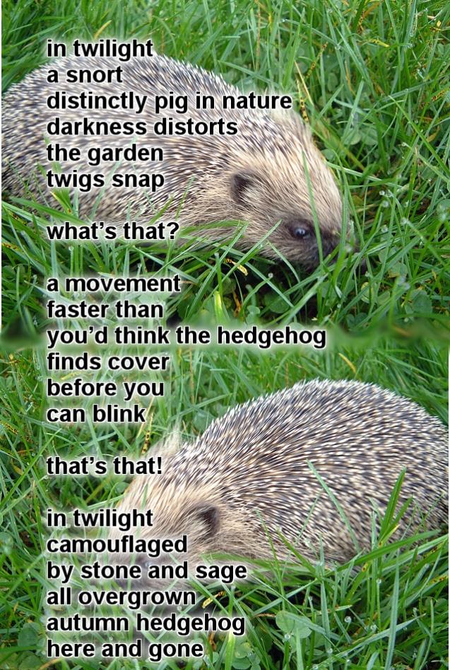 Oonah Hedgehog