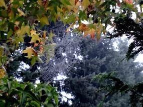 October web
