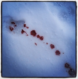 Blood trail.