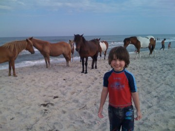 Young James and the Chincoteague horses