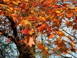 leaves of glory