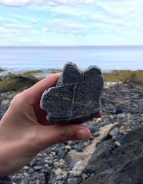 menting beach rock critter